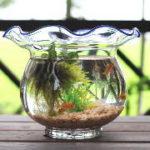 金魚鉢でメダカは何匹飼えるか?金魚鉢でのメダカの飼い方・適正数
