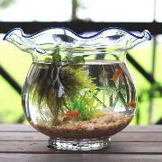 金魚鉢でのメダカ飼育