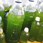ペットボトルやプラケースでグリーンウォーター(青水)を簡単に作る作り方