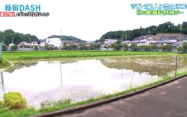 高校敷地内の田んぼ