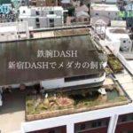 新宿DASHのメダカ