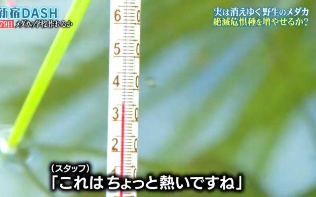 池の水温は35℃