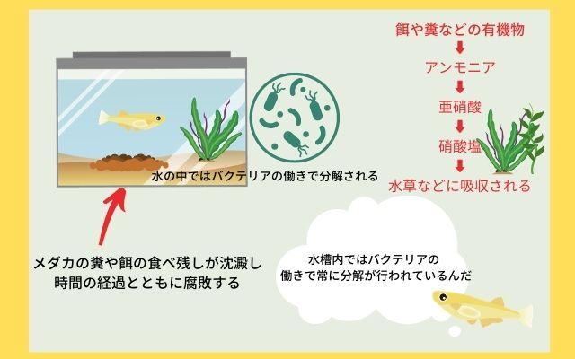 水槽内でのバクテリアの分解