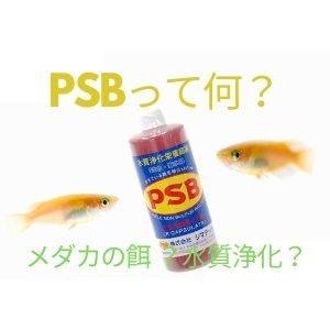 PSBとは
