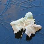 水面に張る氷