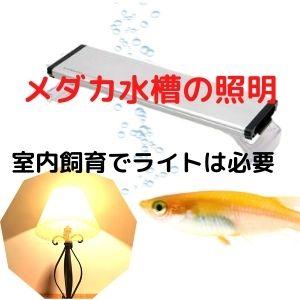 室内メダカ飼育のライト