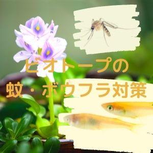 ビオトープの蚊ボウフラ対策
